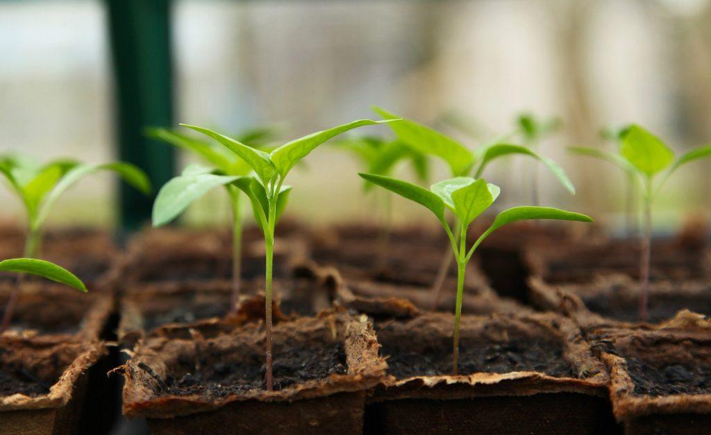 plantation jardin végétaux