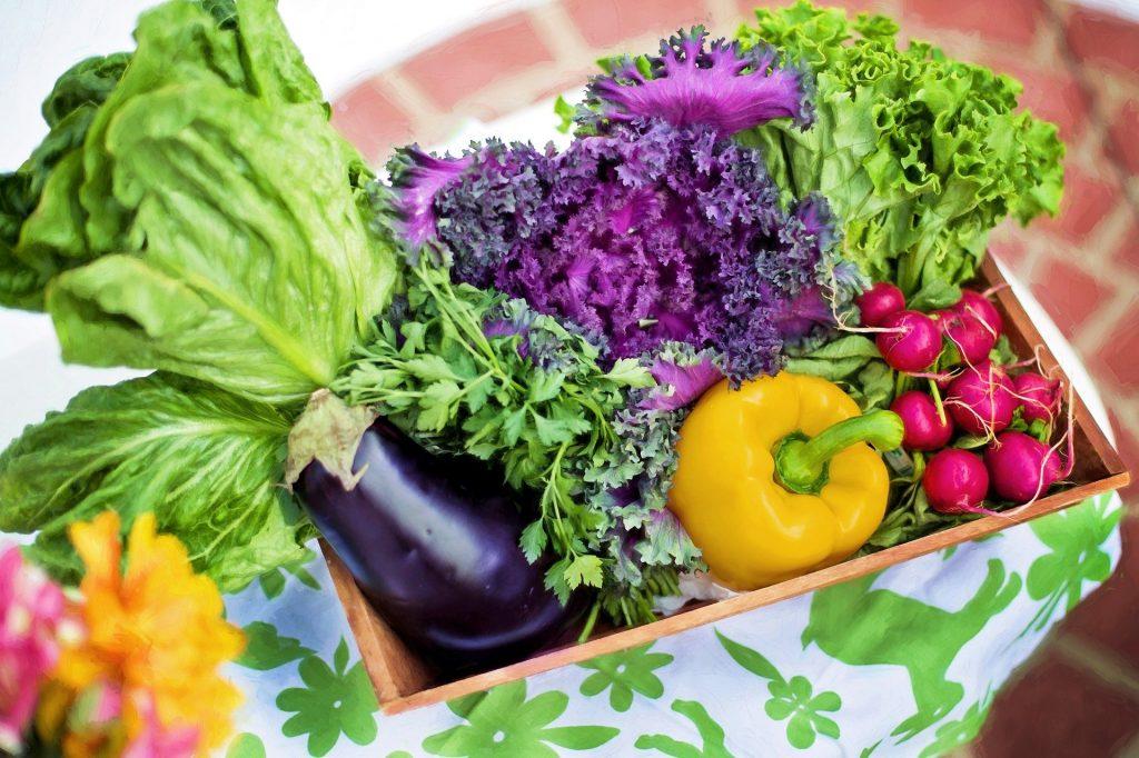 jardin potager plantes végétaux