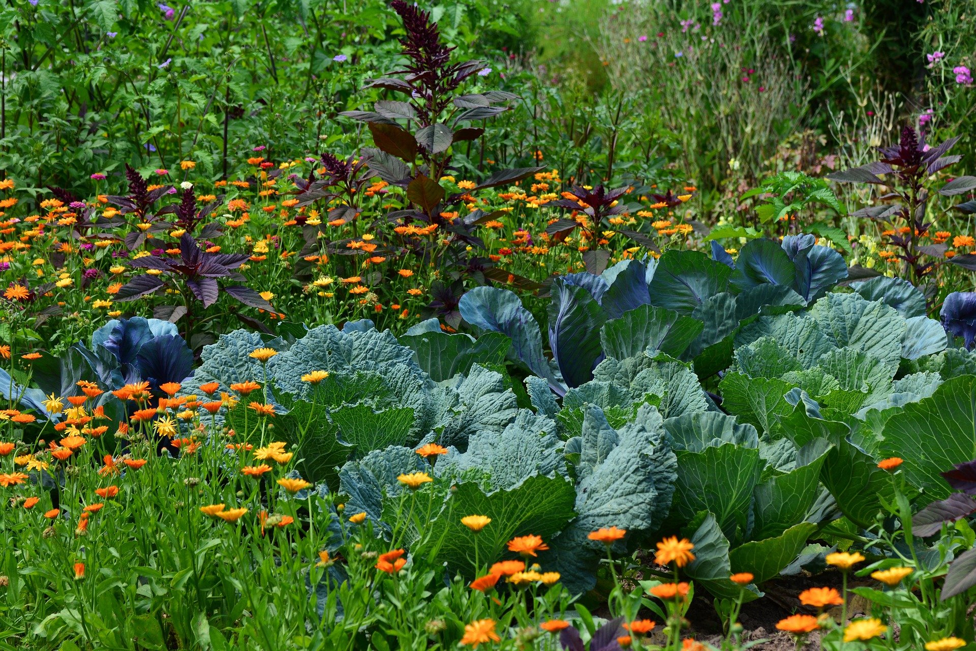plantes jardin potager
